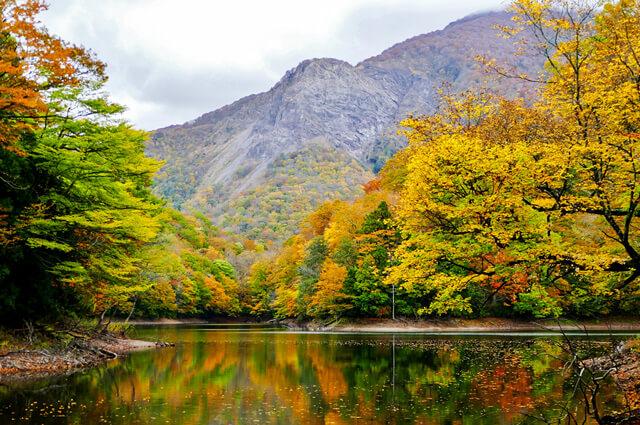 大地が育む「あおもり米」:森の恵み 世界遺産 白神山地
