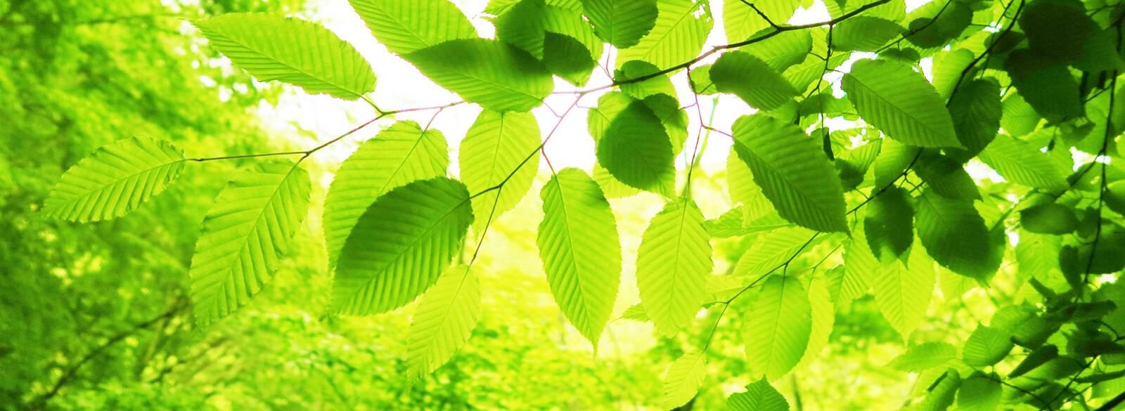 大地が育む「あおもり米」:森の恵み 全国に誇る豊かな森林資源