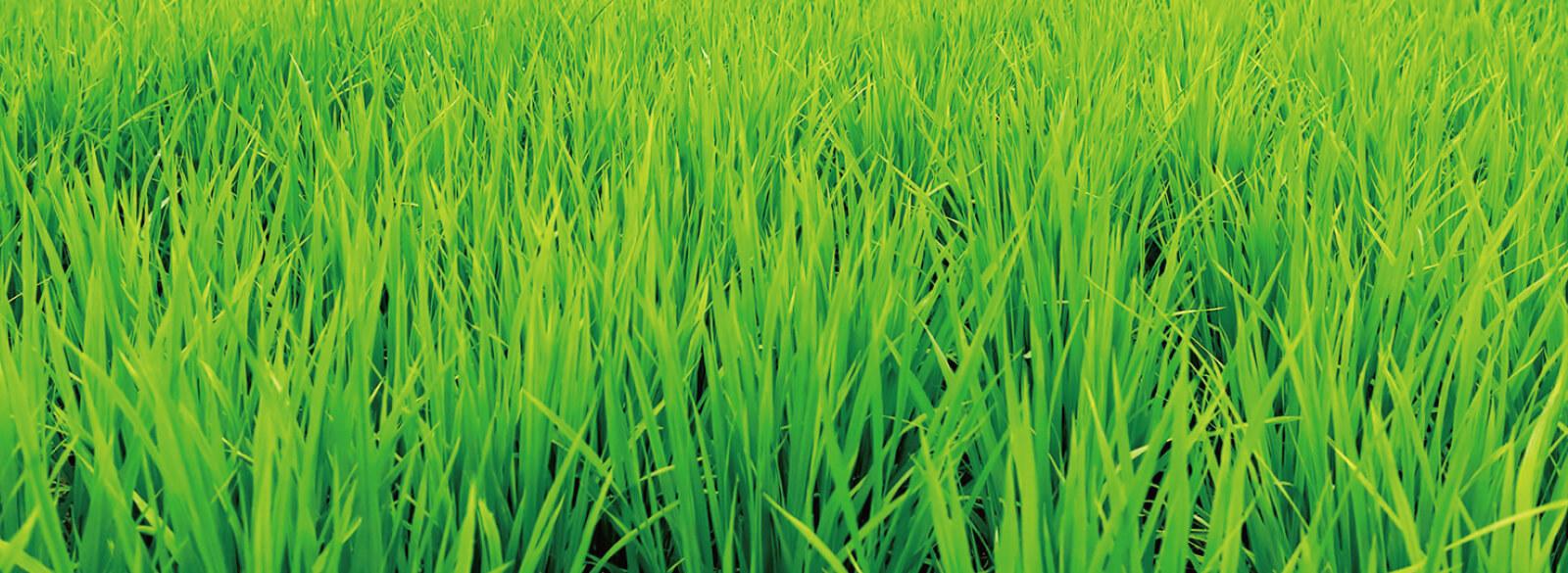 安全・安心な米作り