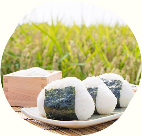 あおもり米:多種用途向け品種の主な特徴「ゆきのはな」