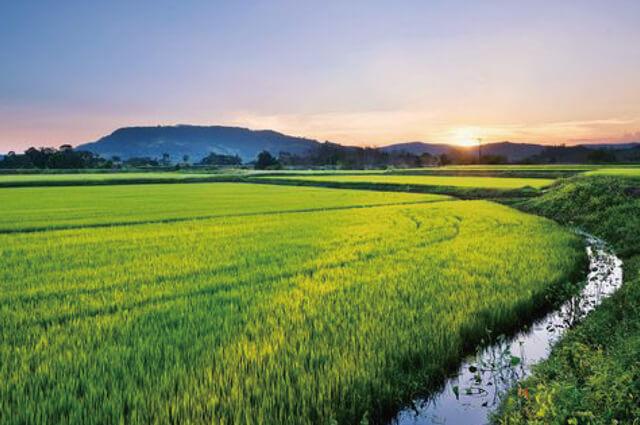 おいしさの秘密:良食味・高品質の米づくり